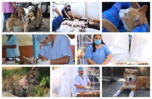 UMAD Papaloapan realizó campaña de esterilización gratuita para perros y gatos